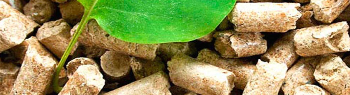 biomaslide1